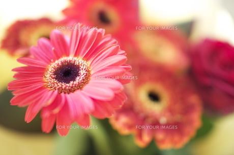 ガーベラの花束 FYI00123489