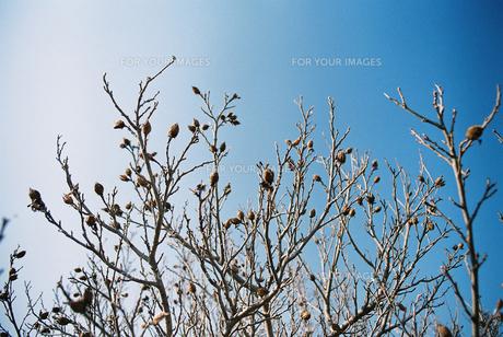 木の芽 FYI00124473