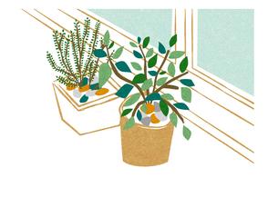 窓際の観葉植物 FYI00125965