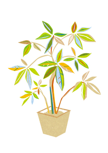 観葉植物 FYI00125975
