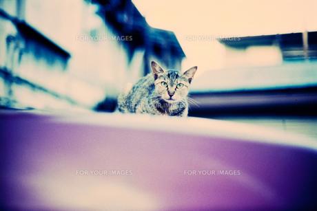 ボンネットの上の猫 FYI00127963