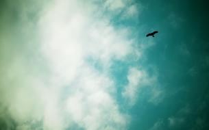 空を飛ぶ鳥の素材 [FYI00128360]
