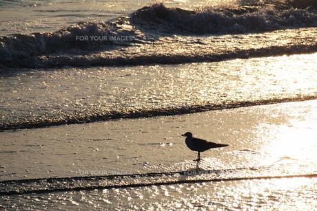 海辺のカモメ FYI00128380