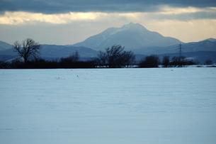 冬の北海道の雪原 FYI00128429