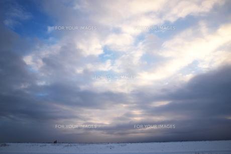 冬の北海道の草原 FYI00128442