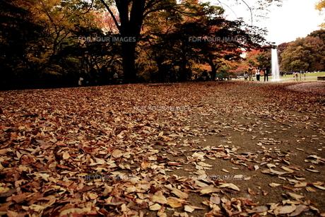 晩秋の代々木公園 FYI00128445