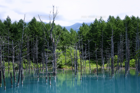 青い池2 FYI00131467