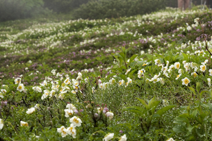 お花畑2 FYI00131469
