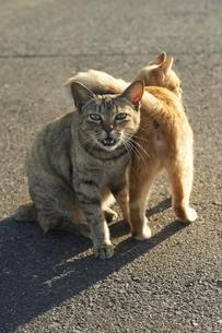 猫02 FYI00133303