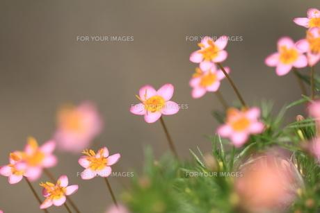 小さな花 FYI00134402