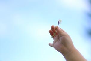 空にかざす花 FYI00134516