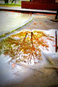 秋の雨あがり FYI00134585