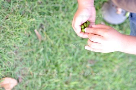 木の実を持つ子供 FYI00134605