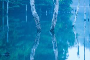 立ち枯れた木、湖畔に立つ FYI00134777