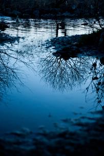 水鏡に映った木 FYI00134778