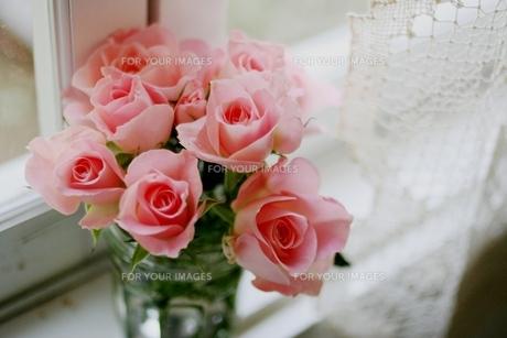窓辺の薔薇 FYI00135999