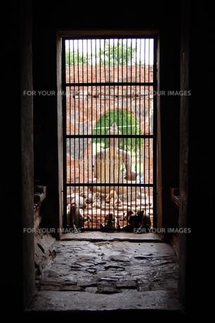 遺跡と仏像と猿。 FYI00136378