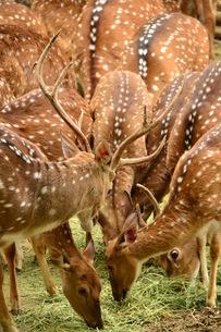 鹿の群れ。 FYI00136383