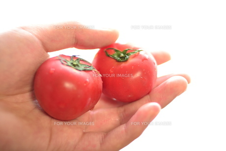 フルーツトマト。 FYI00136419