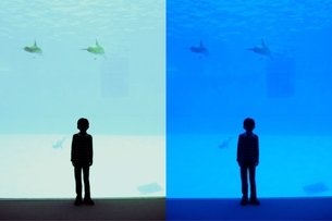 泳ぐイルカ 空飛ぶイルカ FYI00136529