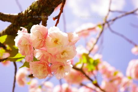 春 FYI00137685
