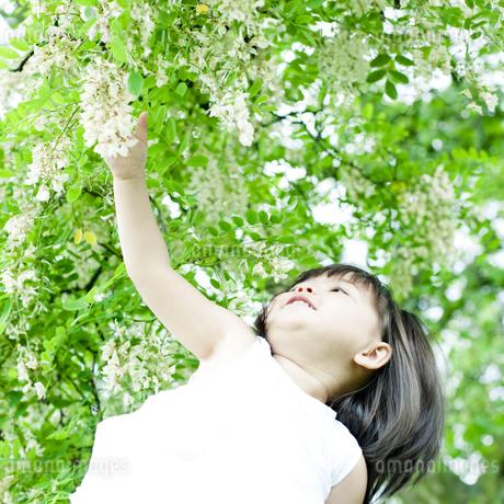 植物に手を伸ばすハーフの少女 FYI00143192