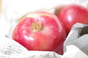 採れたてのりんご FYI00144843