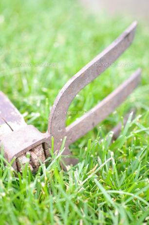 芝生と古いクワ FYI00144844