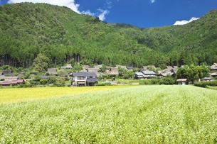 京都 美山かやぶきの里 FYI00146316