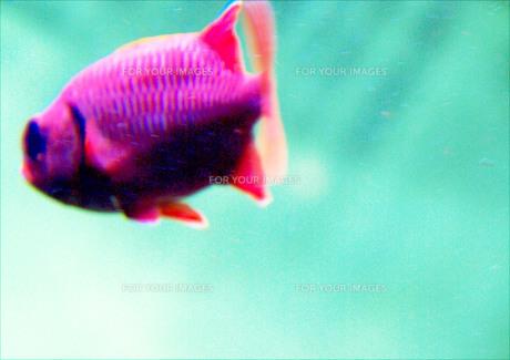 魚 FYI00147454