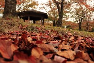 秋の公園 FYI00150968