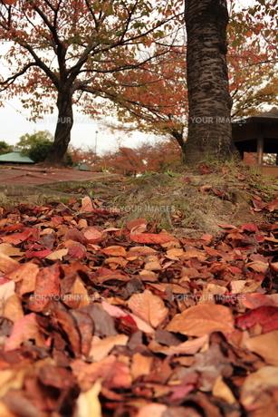 秋の公園 FYI00150969