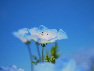 青い空と青い花 FYI00152869