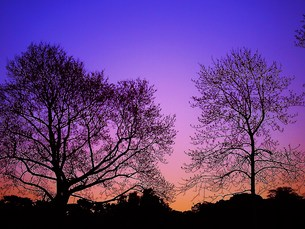 冬の夕刻 FYI00152884