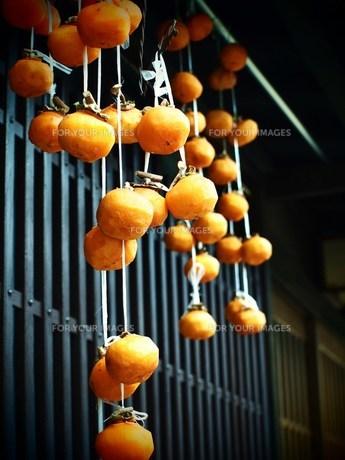 日本家屋の干し柿 FYI00152904