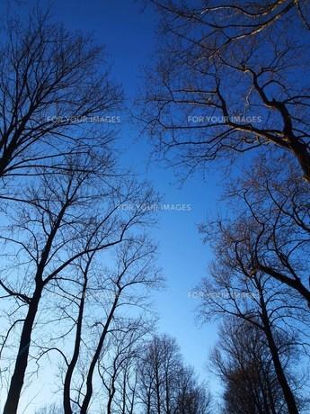 冬の空 FYI00152905