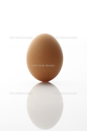 卵 FYI00153360