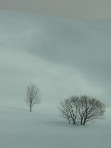 雪原の木の素材 [FYI00153437]