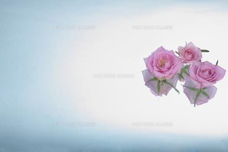 ビュティー薔薇の香り FYI00154025