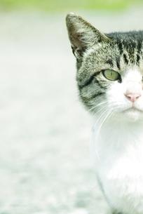 猫 FYI00163962