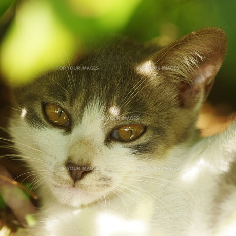 猫 FYI00163974