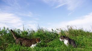猫二匹 FYI00163994