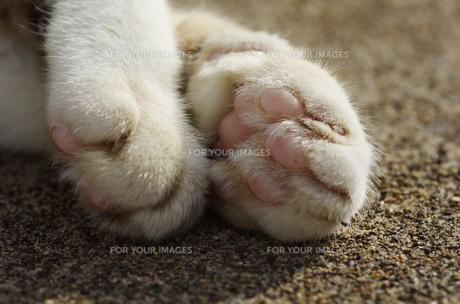 猫の手 FYI00164007