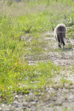 後姿の猫 FYI00164025