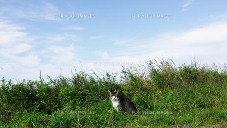 草むらに猫 FYI00164029