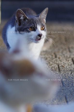 猫 FYI00164034