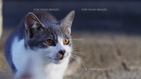 猫 FYI00164042