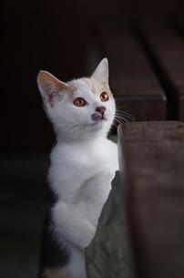 猫 FYI00164044