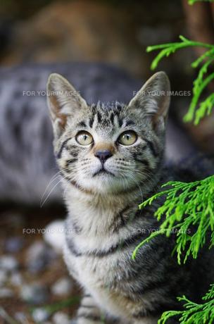 猫 FYI00164053