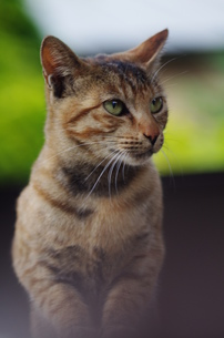 猫 FYI00164055